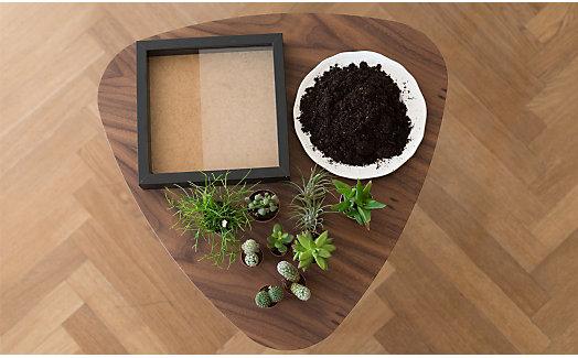diy sukkulenten im bilderrahmen yomonda. Black Bedroom Furniture Sets. Home Design Ideas