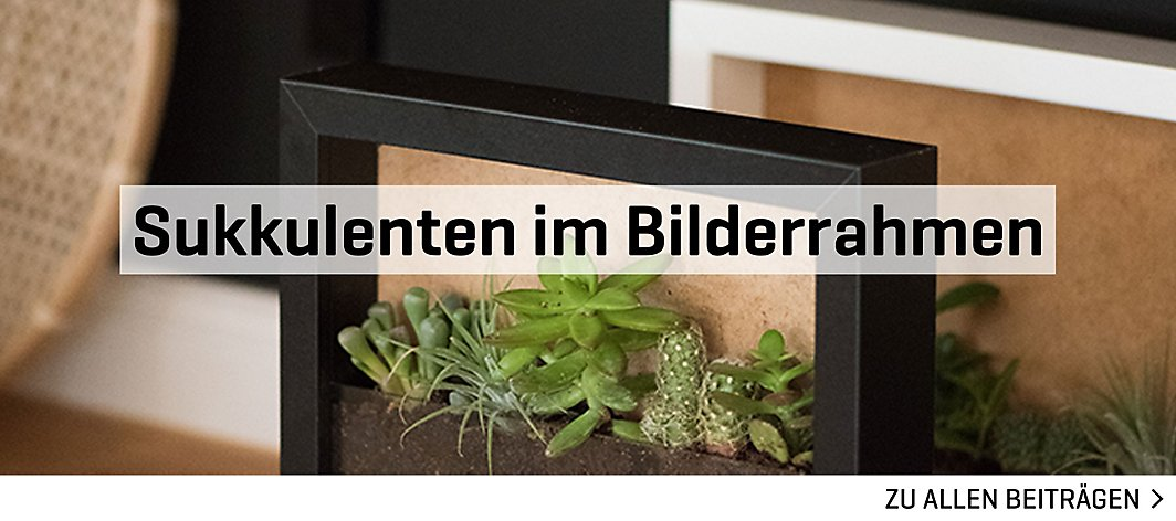 diy sukkulenten im bilderrahmen yomonda. Black Bedroom Furniture Sets. Home Design Ideas
